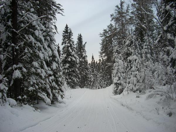 AD Winter Snowmobiling Trail.jpg